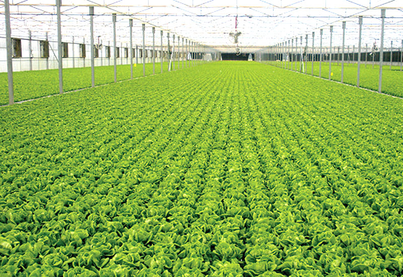 From Israel with Love – High-tech hydroponics makes its U.S.